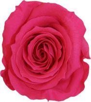 Rose Stabilisée Standard Fushia x 6