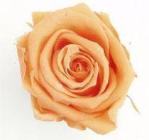 Rose Stabilisée Standard Pêche x 6