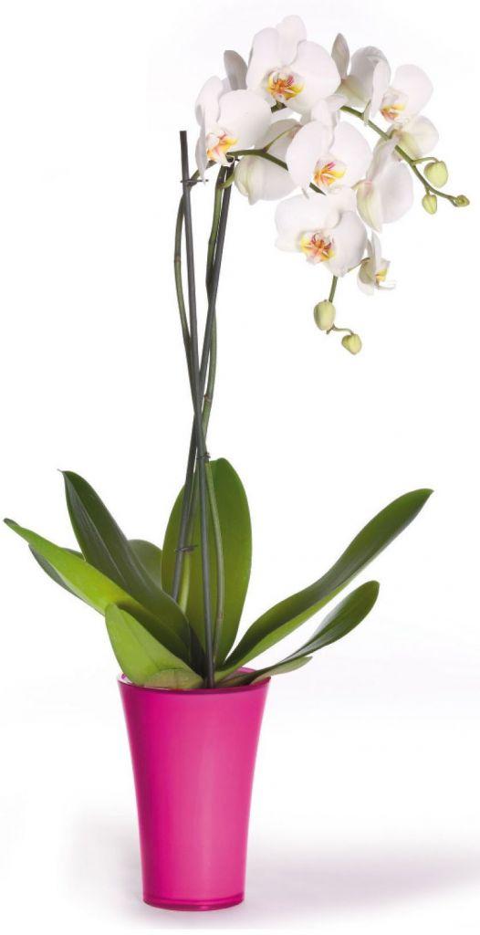 Vase Plexi Fizzy 20 Violet